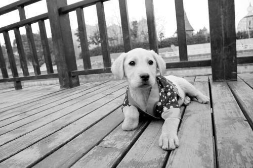 狗狗腹泻怎么办?狗狗为什么一直拉肚子